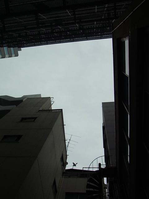ファイル 736-1.jpg